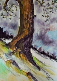 Le tronc / Aquarelle / 50 x 70