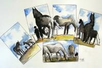 Etudes chevalines / Aquarelle et encre / 70 x 50
