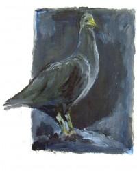 Pigeon / Acrylique / 20 x 30