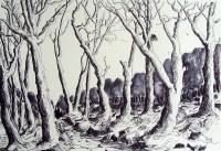Chemin de l'orée du bois / Encre / 65 x 50