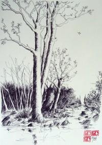 L'arbre les pieds dans l'eau / Encre / 65 x 50