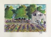 Les lavandes / Encre et aquarelle / 18 x 30