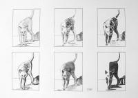 Le chat et ses ombres:  Etudes / Encre / 50 x 65