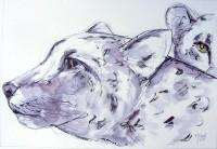 Les guépards / Encre / 50 x 65