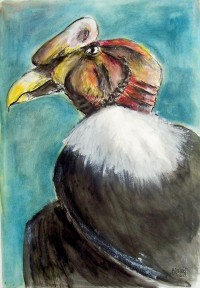 Le condor / Encre et aquarelle / 50 x 70