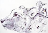 Le léopard des neiges / Encre / 70 x 50