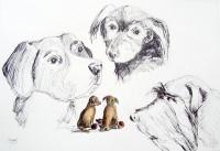 Le cercle canin / Encre et aquarelle / 70 x 50