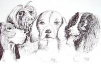 La compagnie canine / Encre / 70 x 50