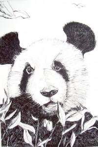 Suis je le dernier des pandas ? / Encre / 50 x 70