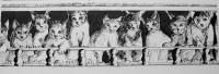 La galerie des chats / Encre / 70 x 50