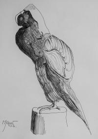 Perroquet ou nu ? / Encre / 30 x 40