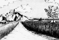 Les blés / Encre / 70 x 50