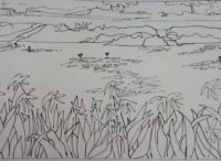 L'étang aux lys, phase 1 / Encre / 70 x 50